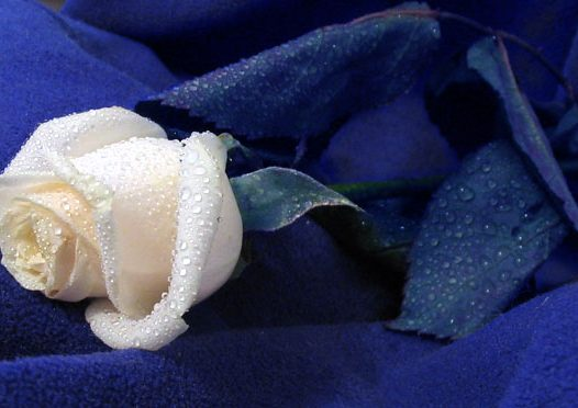 Rosa di sale, Pablo Neruda